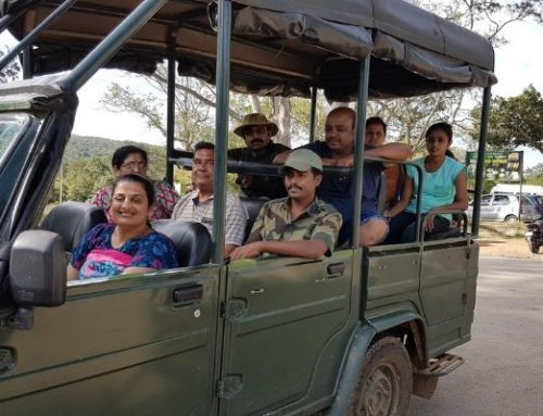 Jungle Safari at Bandipur Tiger Reserve and National Park